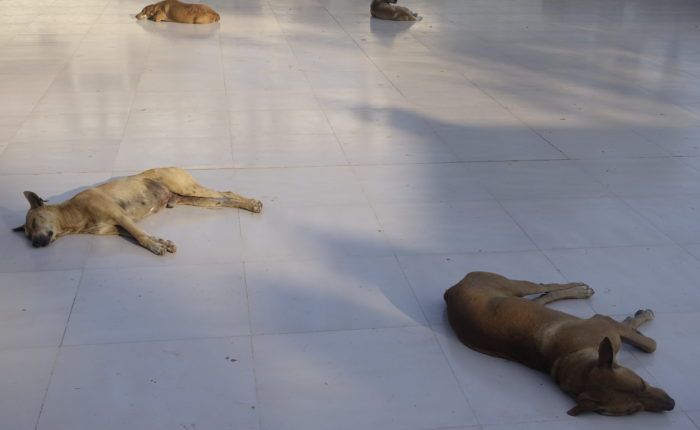 An Open Letter to the Dogs of Southeast Asia